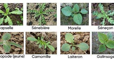 Le temps sec et chaud de ce début avril a permis de réaliser les semis de chicorées.