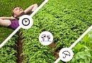 Zorvec Enicade : La meilleure & la plus longe protection contre le mildiou