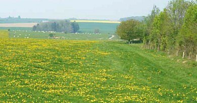 Désherbage des prairies en mars – avril pour une meilleure qualité (VEM-DVE)