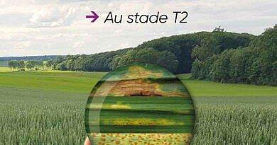Le stade « T2 », le stade clé pour une protection optimale et maximiser les rendements [VIDEO]