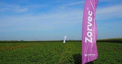 ZORVEC Enicade® : Protection supérieure de longue durée contre le mildiou [VIDEO]