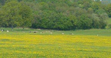 Désherbage des vivaces  en prairies